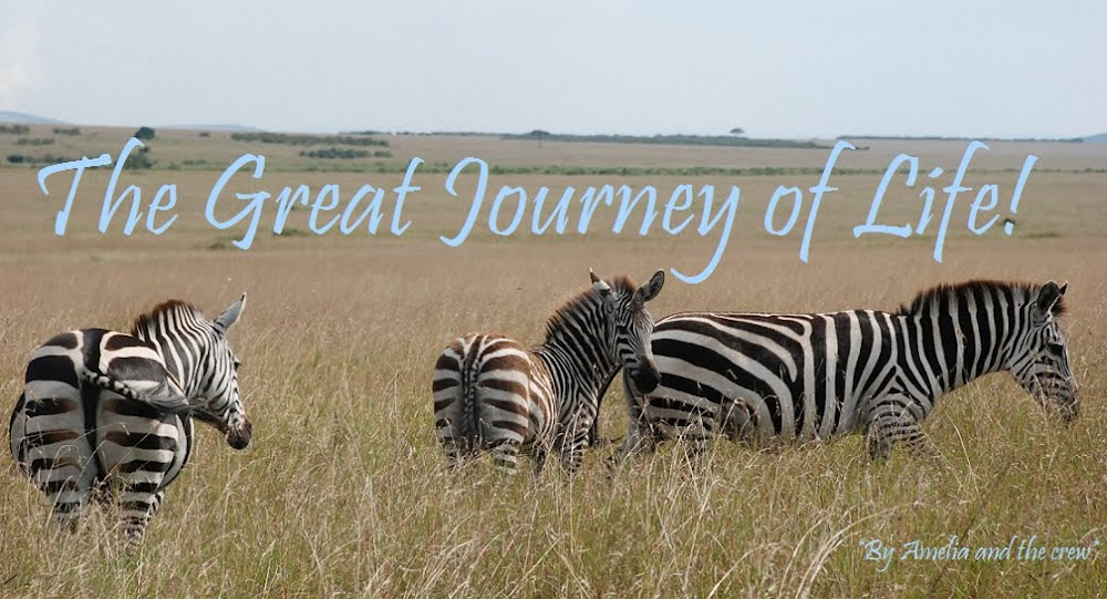 The Great Journey of Life!