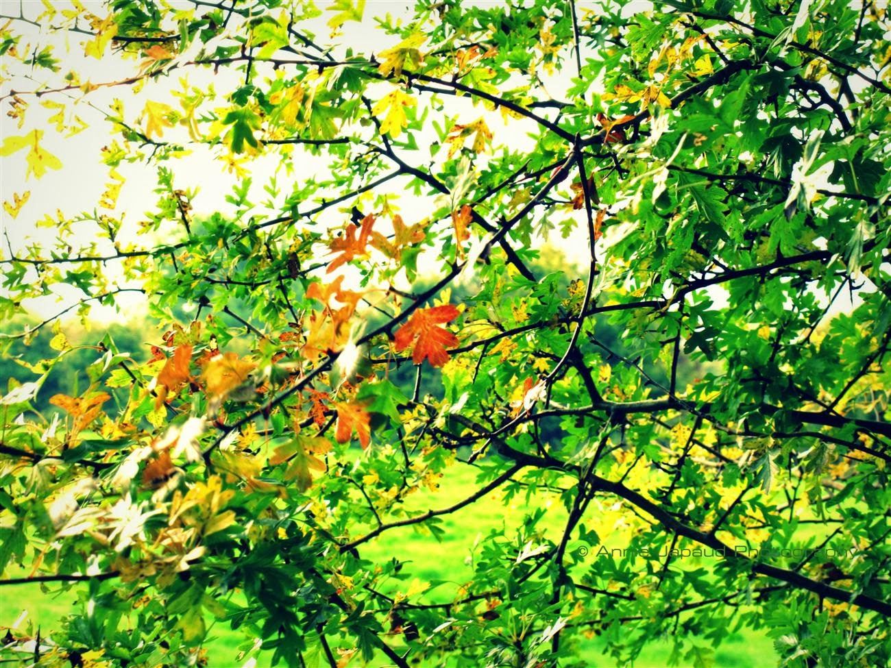a hint of autumn, green leaves and  bit of colour in them
