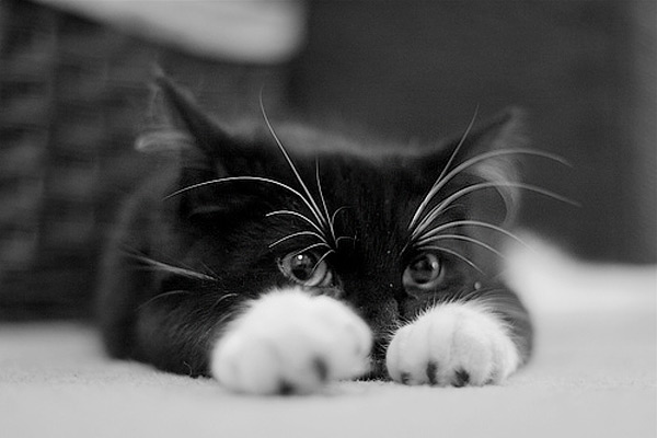 This thread is for cats and cat enthusiasts. Cute_kitten_5