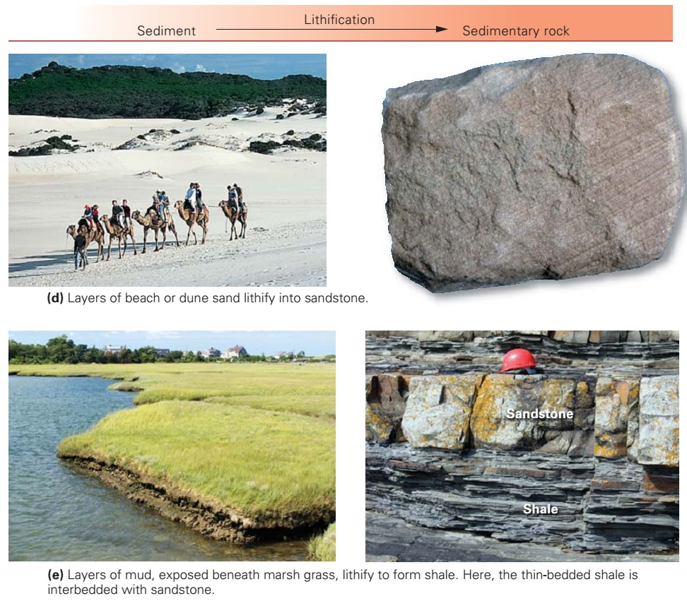 Classes Of Sedimentary Rocks Learning Geology