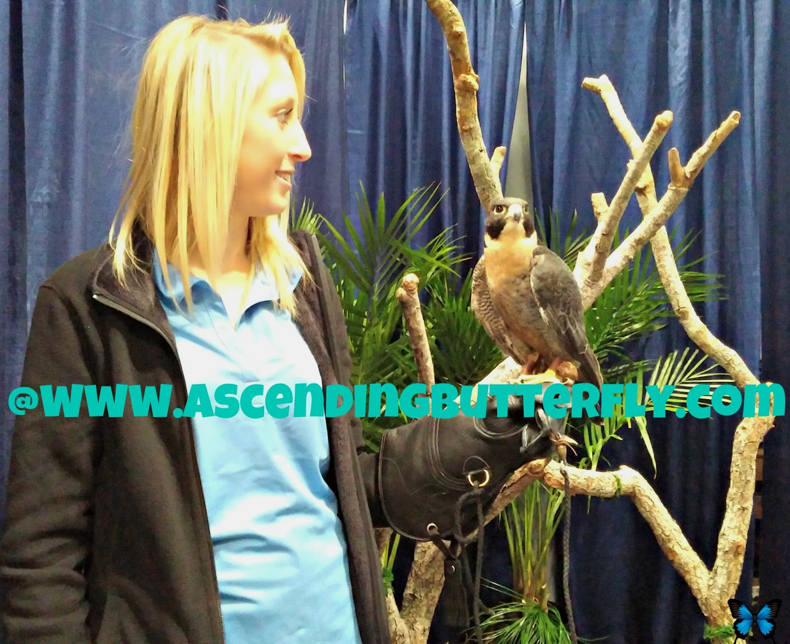 Sea World Display Area at 2014 New York Times Travel Show, Bird
