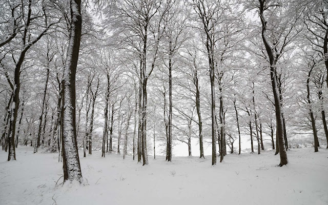 Foto winter in den wald