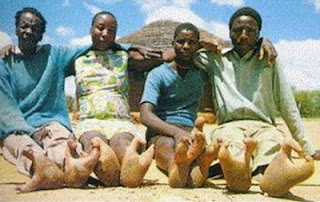 Curiosos Homens - Avestruz Na Africa