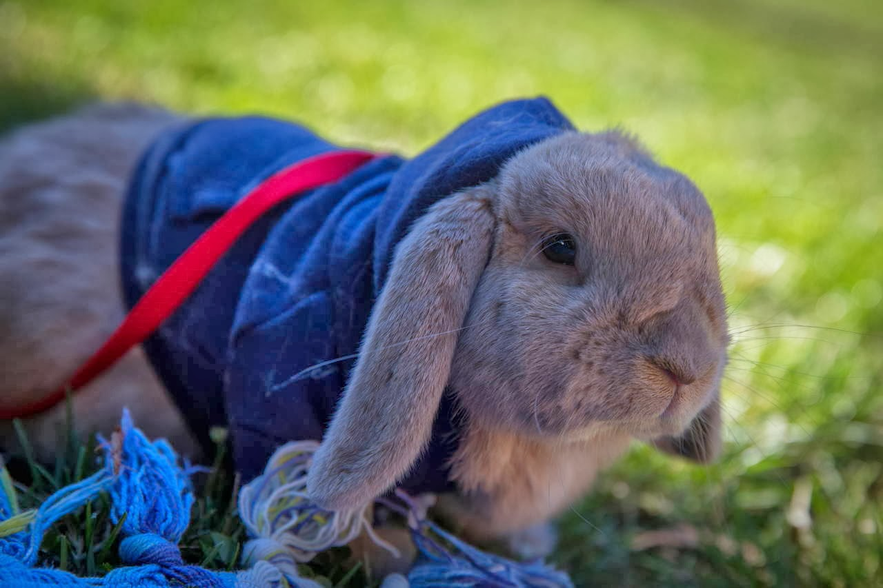 Funny animals of the week - 31 January 2014 (40 pics), rabbit wears sweater
