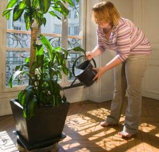 Defendiendo la naturaleza - Hogarmania jardineria ...