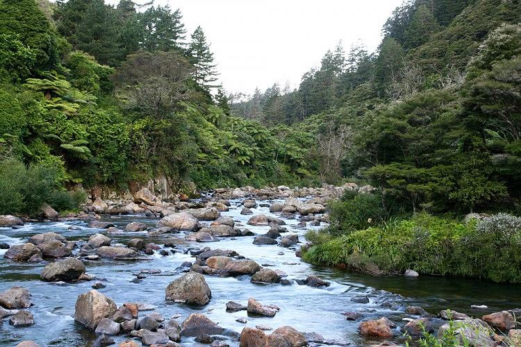 No la la minería del oro en N.Zelanda
