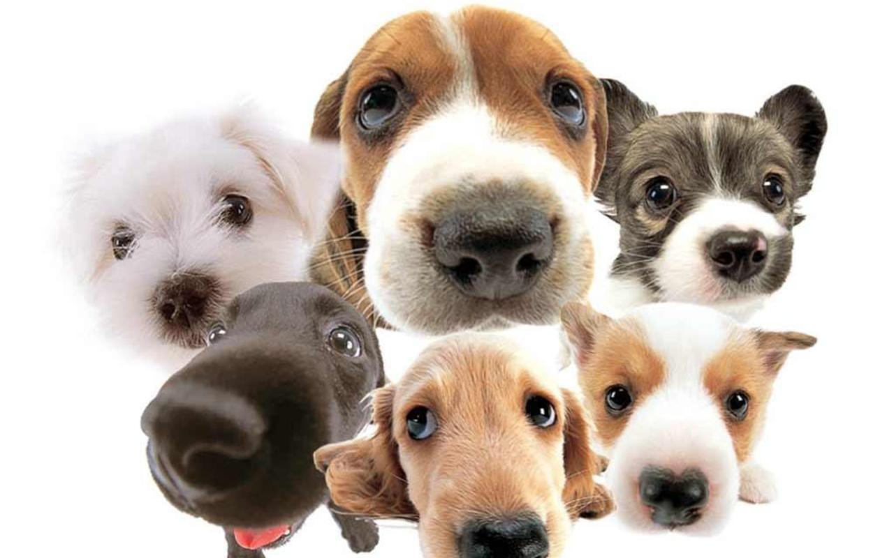 http://1.bp.blogspot.com/-Slw_tGG7bF8/Tb5xmmAC7gI/AAAAAAAAIjs/MFwRENWUYgE/s1600/1269246672_1280x800_six-dogs-wallpaper.jpg