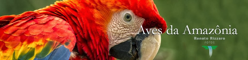 Aves da Amazonia