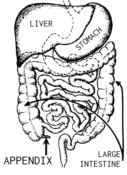 according2robyn  digestive system  part 10  the bitter end