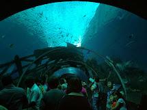 Aquarium Marine Life Park Singapore