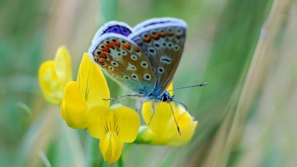 Butterfly HD Wallpaper New Image on Floweer