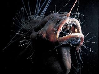 Conheçam os peixes abissais - Os habitantes das profundezas
