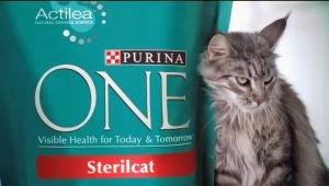 purina sterilcat