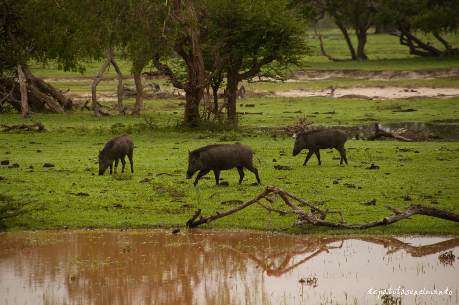 Animales en Yala, Sri Lanka
