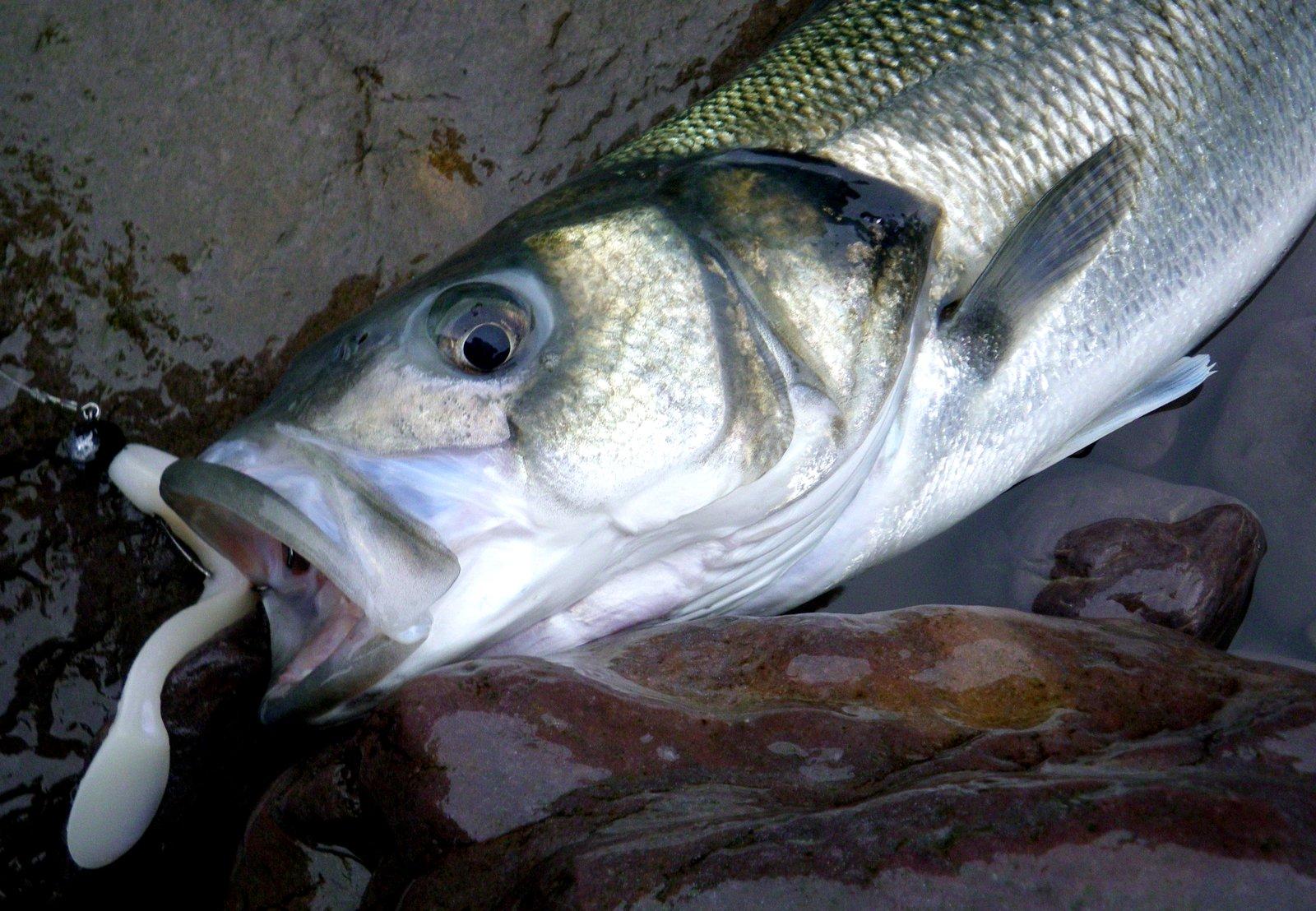 David 39 s bass fishing blog a winter bass today for Bass fishing in winter