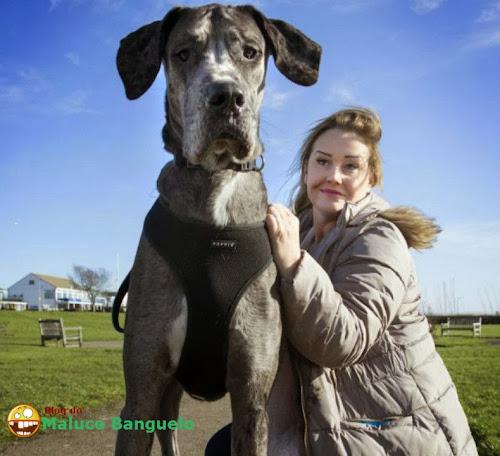 A raça do maior cachorro do mundo