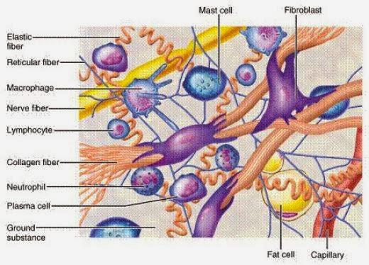 Collagen là gì ? Tác dụng của Collagen
