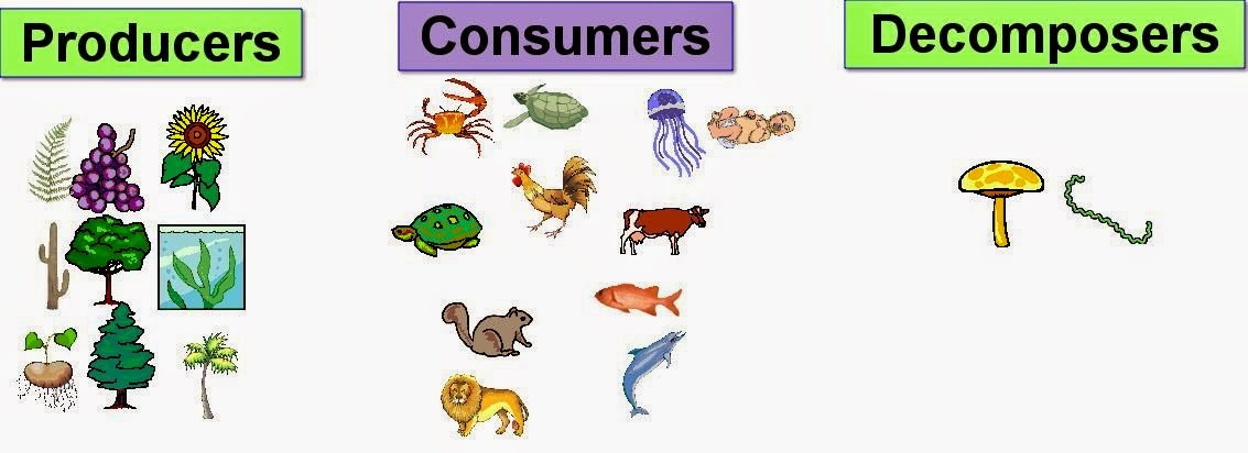 Primary Consumers Examples Ecosystems