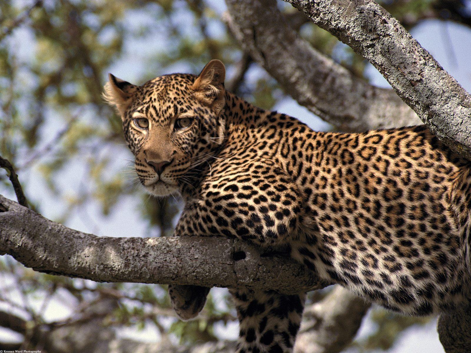 Amper Bae: wild animals in africa