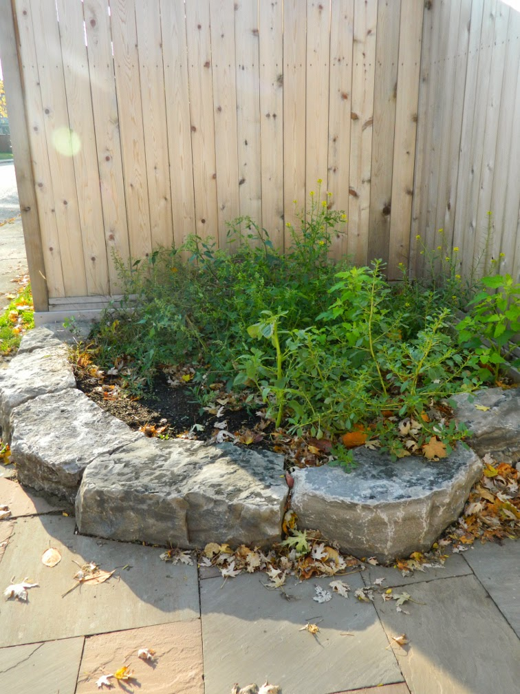 Toronto garden cleanup Pape Village before by Paul Jung Gardening Services