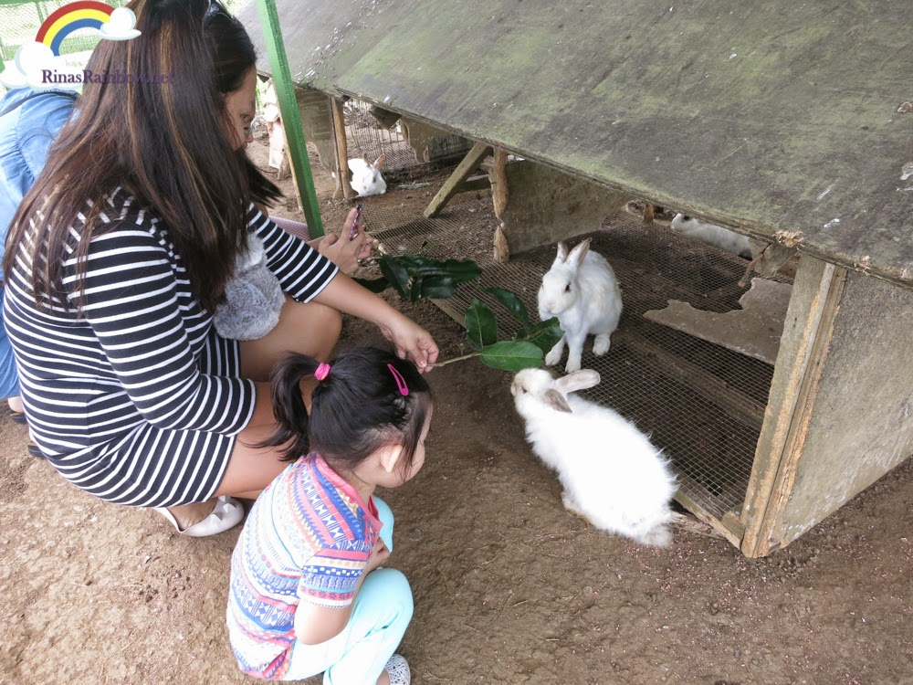 feeding the bunnies