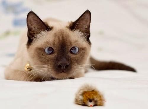 Gambar-Gambar Kucing Imut-imut