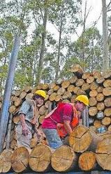 Demanda Forestal - Paraguay