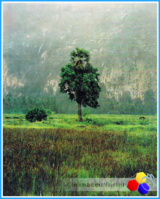 mknace unlimited™ | Pokok stea berlatarbelakang gunung baling in early 90