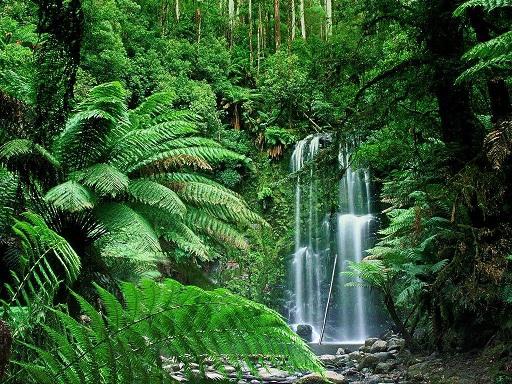 Mempelajari Ekosistem Hutan hubungan timbal baik yang terjadi di dalam hutan Mempelajari Struktur dan Fungsi Hutan
