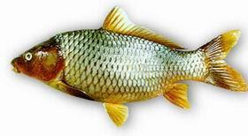 http://www.fao.org/fishery/en