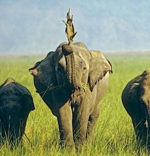 Elefante esquisito