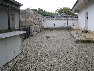 Akashi Cat, Hyogo