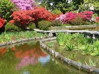 池にツツジが映えている光景。