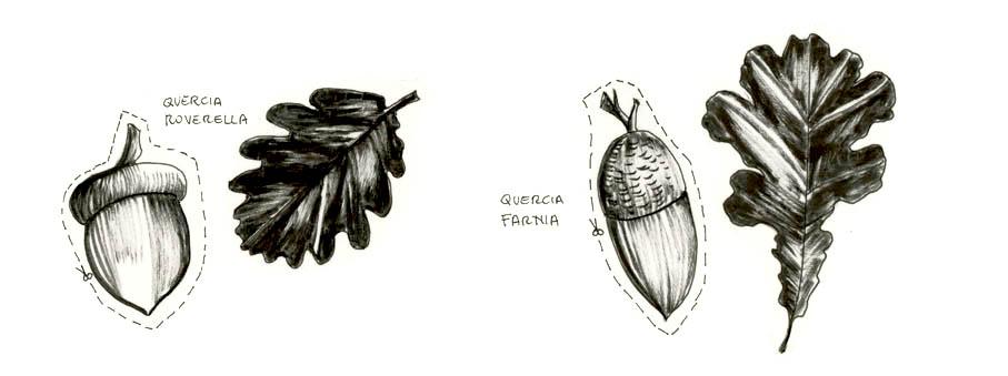 Rossana Bossù illustratrice