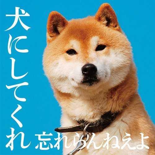 [Album] 忘れらんねえよ – 犬にしてくれ (2015.08.05/MP3/RAR)