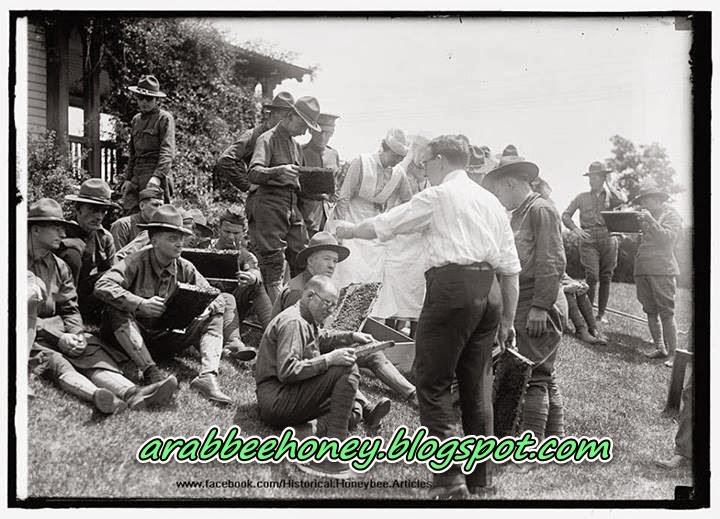 صورة تاريخية-تدريب قدامى المحاربين الأمريكيين ليصبحوا نحالين