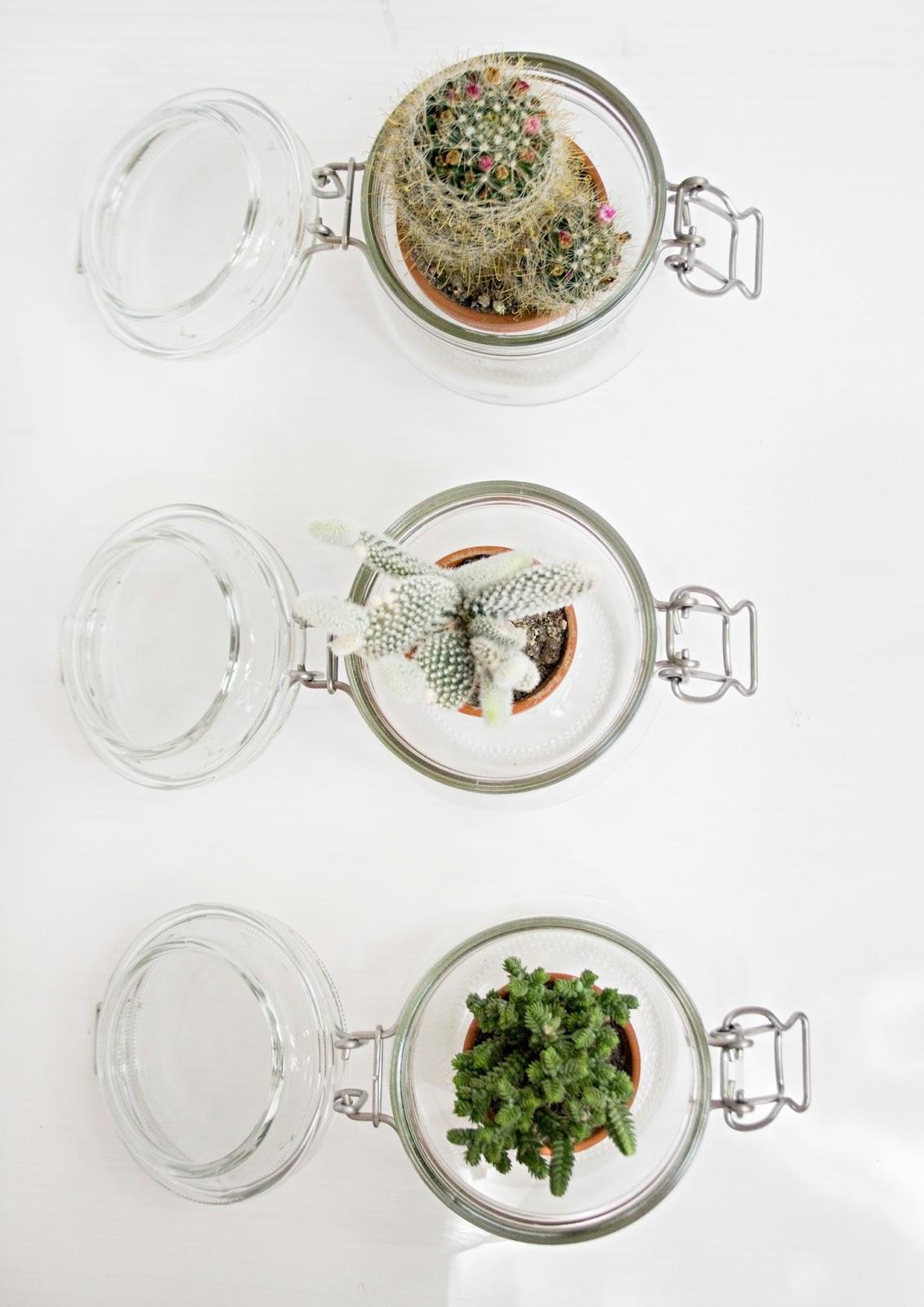 Kakteen im Einmachglas