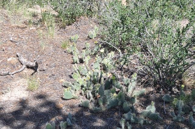 cactus Greencrest Colorado Springs coloradoviews.filminspector.com