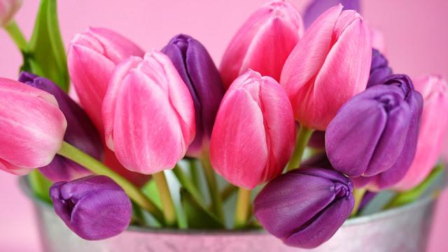 Ramos de Tulipanes Purpura y Rosados