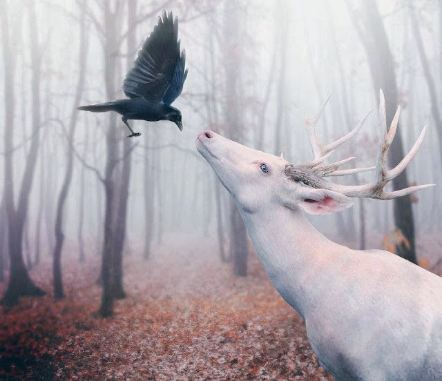 Alces, ciervos ... 6756360rs