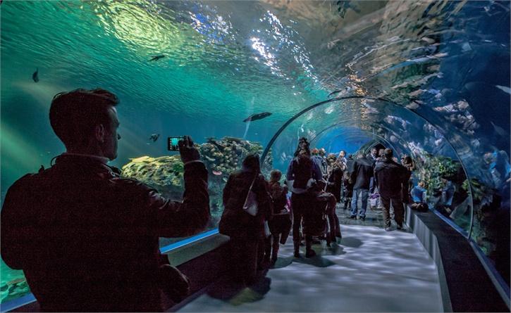 Reef mania italia copenaghen apre l 39 acquario pi grande d - Acquari di casa ...