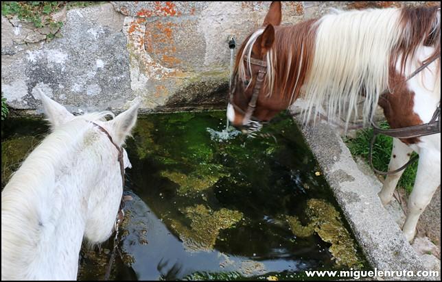 Rutas-caballo-equitación-Gredos_4