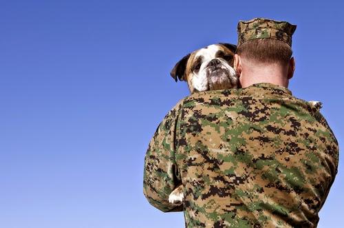 Perros de ayuda a personas con sindrome de estrés postraumático