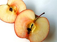 apel, buah apel, gambar apel, apple, fruit, jenis jenis apel, apel hijau, apel merah