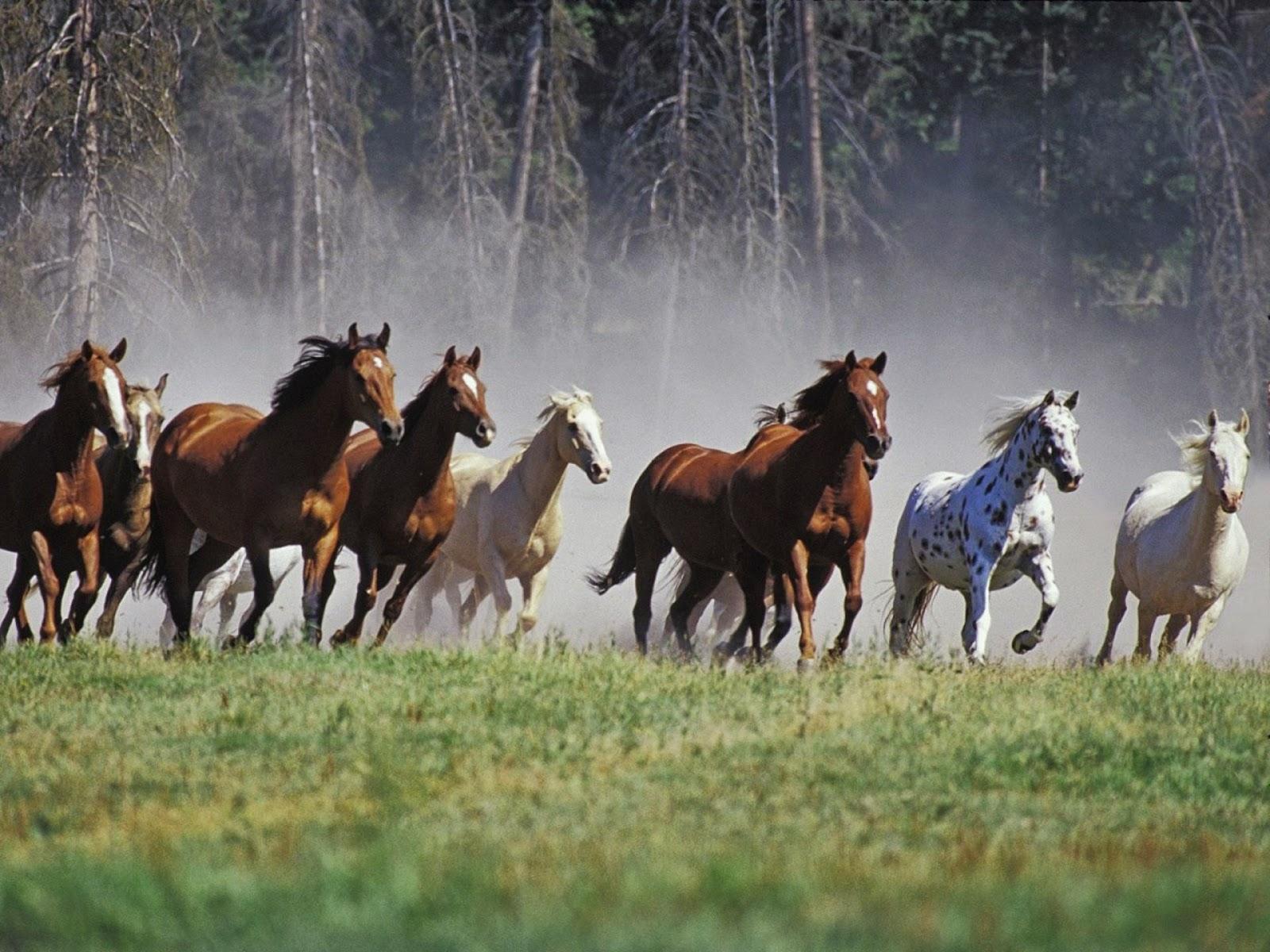 Hình ảnh ngựa đẹp