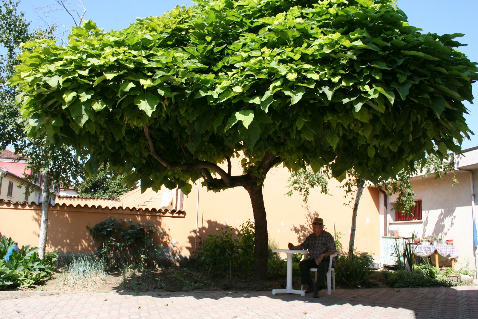 Salute e bellezza home giardinaggio le piante anti zanzare - Contro le zanzare in giardino ...