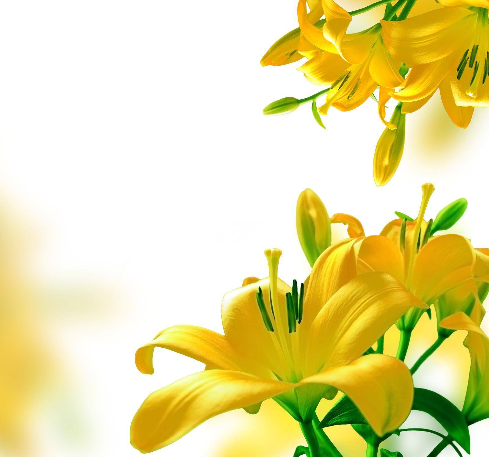 обои для рабочего стола бабочки на цветах бесплатно