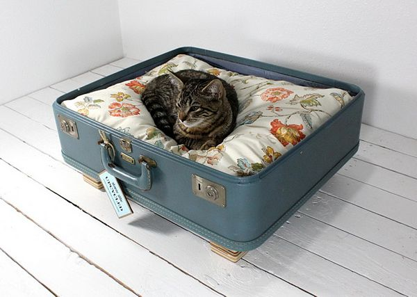 una maleta para tu mascota