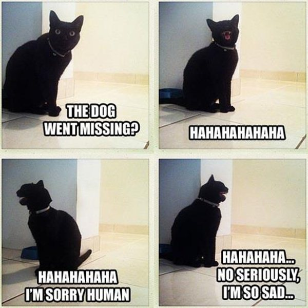 animal pictures with captions, lolcats, dog went missing