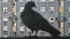 http://www.kxly.com/news/reports-10000-doves-searched-by-police-in-china/28352302